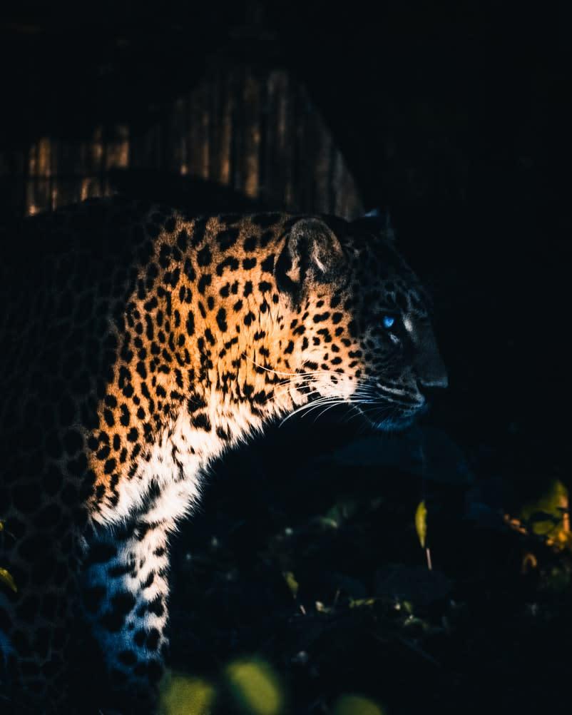 Yggdrasil Partners ReelPlay uvoľní Jaguar SuperWays zo Bad Dinga